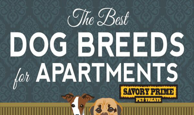 The Best Dog Breeds for Apartment Living | Savory Prime