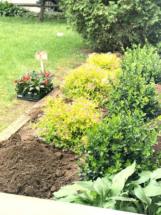 Planting the begonias in the front of the bed