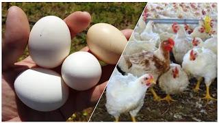 زيادات عشوائية رهيبة في ثمن لحم الدّجاج والبيض .. وهذه الأسعار الجديدة