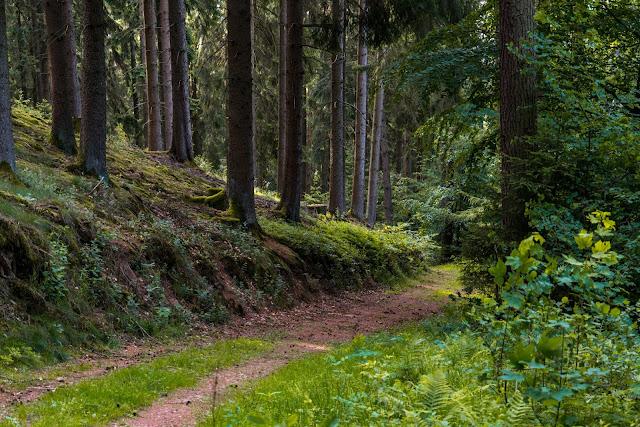 Erzquellweg - Mudersbach - Naturregion Sieg | Erlebnisweg Sieg | Natursteig-Sieg 09