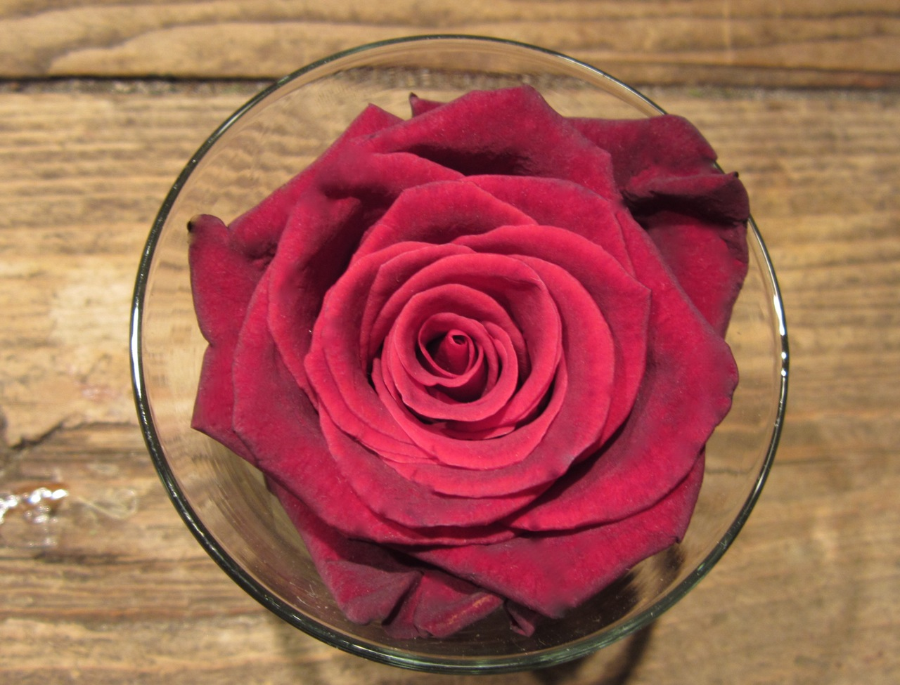 Sammy's Flowers: A Different Shade of Red (roses)