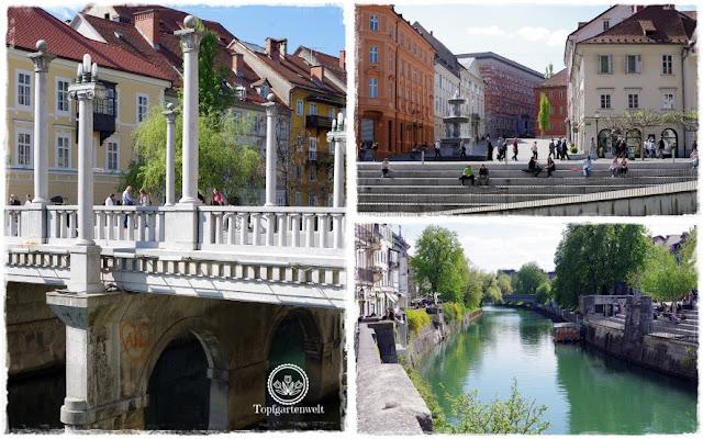 Gartenblog Topfgartenwelt Slowenien: Laibach Innenstadt