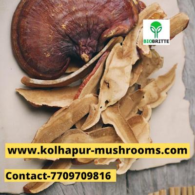 Scope Of Ganoderma Mushroom In Budaiya