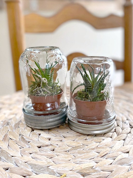 How to Make a Succulent Terrarium using Recycled Jars