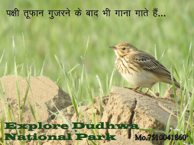 For inquiry about Dudhwa Safari, dudhwa national park contact details