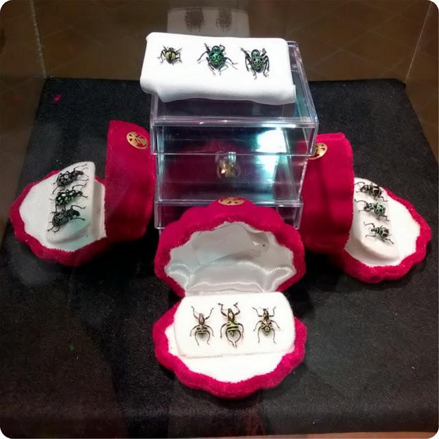 7 meraviglie degli insetti a esapolis padova