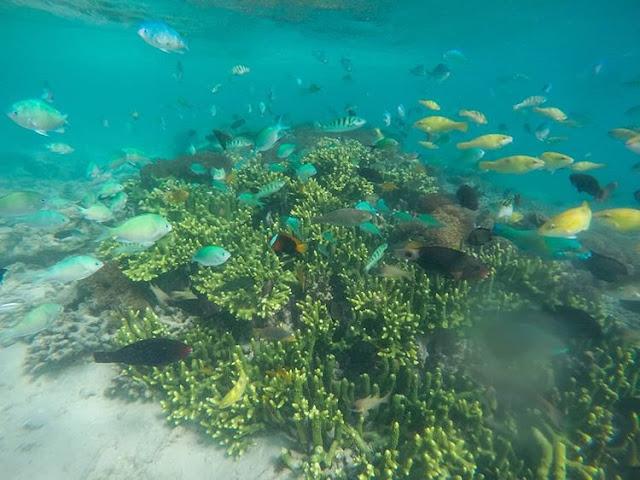 Keindahan bawah laut Gili Patelu Lombok, sumber ig @titaxinai