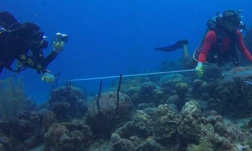 """Colombia """"siembra"""" corales para restaurar el ecosistema"""