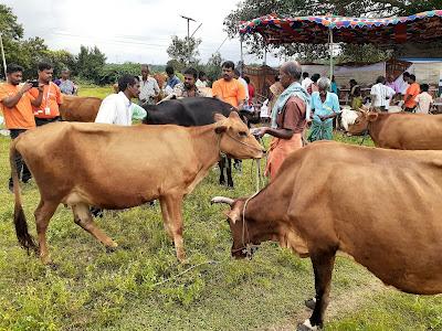 fullerton-india-treats-over-68-000-animals
