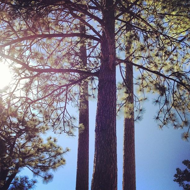 three trees, sun, sky