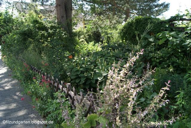 Am Zaun wächst Muskateller-Salbei und Rote Spornblume