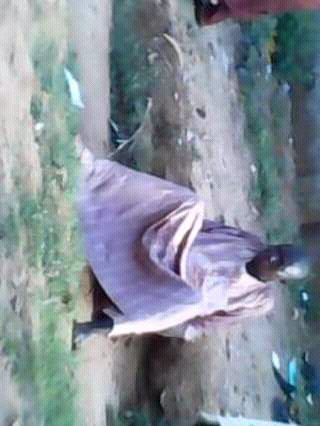 Hausa man caught raping a five year old boy