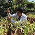 El biochar de Guadua angustifolia Kunth procedente de los residuos del aprovechamiento de Plantaciones Forestales como enmienda orgánica para el suelo