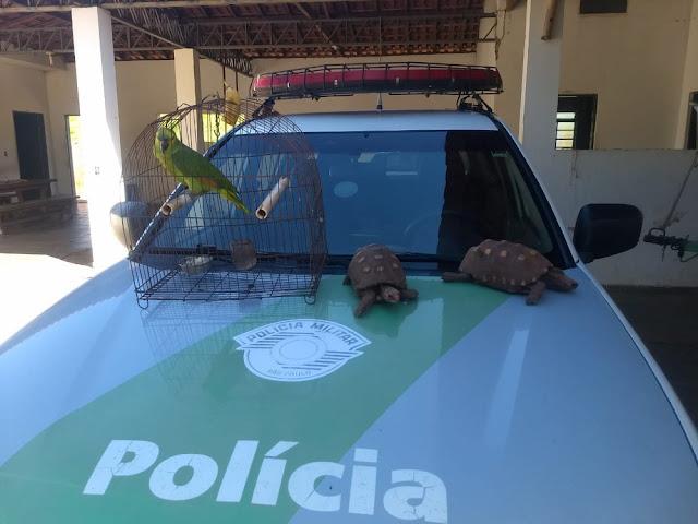 Polícia Ambiental multa homem em R$ 1,5 mil por manter em cativeiro animais da fauna silvestre