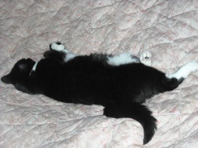 Biało-czarna kicia