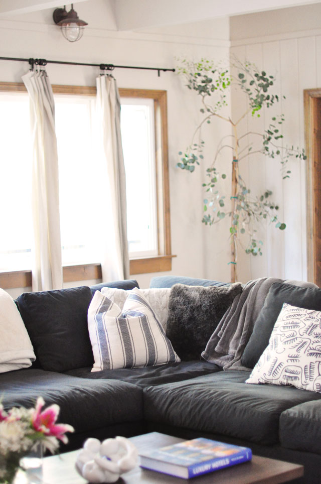 living room decorating ideas, silver dollar eucalyptus tree, indoor tree in basket