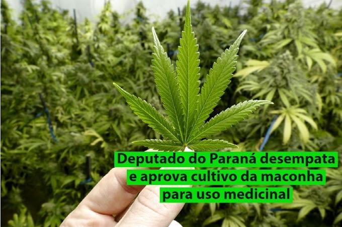 Deputado do Paraná desempata e aprova cultivo da maconha para uso medicinal