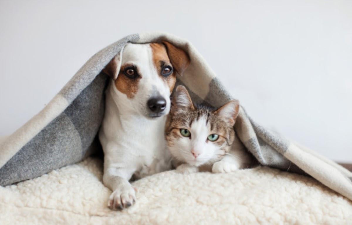 Могут ли собаки или кошки заразить коронавирусом человека?