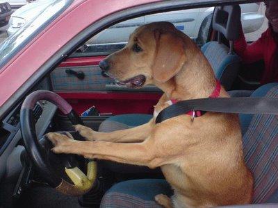 A lei prevê ainda que, se não for possível colocar os animais em um cinto  de segurança, o animal deve ser transportado em uma caixa específica ou  levado no ... ff7c703670