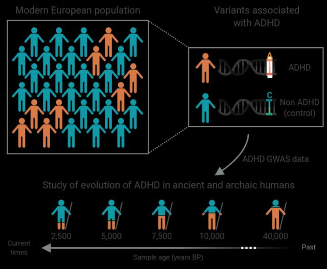 ADHD: genomic analysis in samples of Neanderthals and modern human