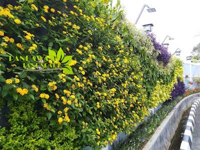 vertical garden di jogja
