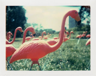 Flamingos by ~emeph on deviantART