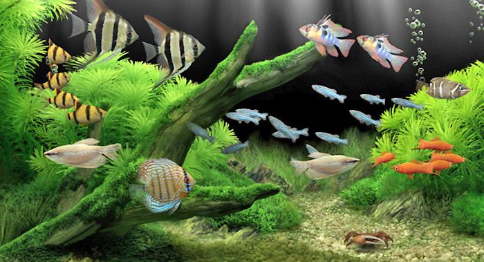 De tout et de rien accessoires pour aquariums en ligne for Vente aquarium en ligne