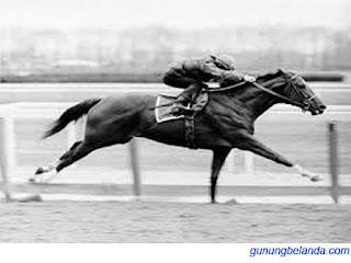 Kuda Bisa Berlari Lebih Cepat dari Burung Unta