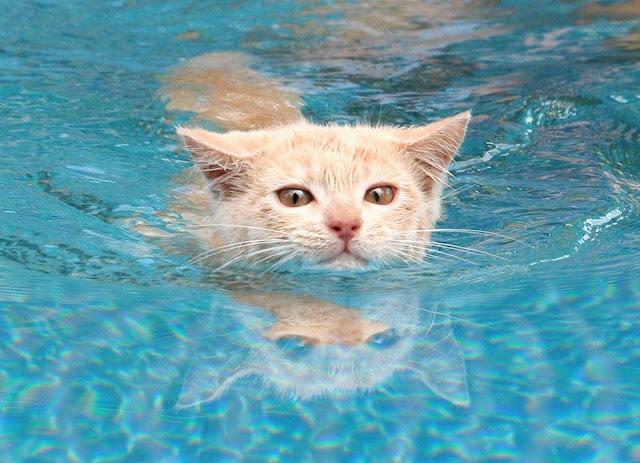 لماذا تكره القطط الماء والاستحمام