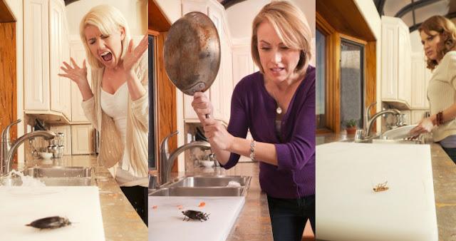 استخدام السكر وصودا الخبز للقضاء نهائا على  الصراصير فى المنزل