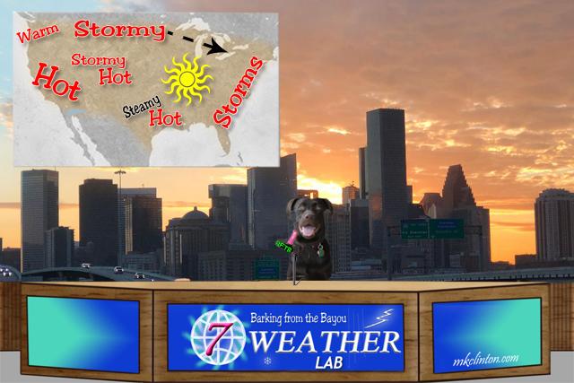 BFTB NETWoof Weather Lab Paisley