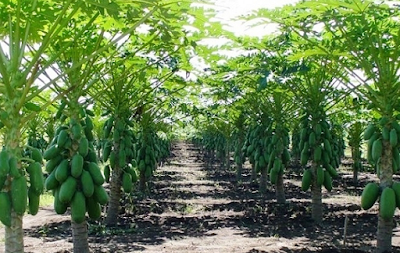 Cerita Petani Sukses Dari Nol Yang Jadi Pengusaha Kaya Raya
