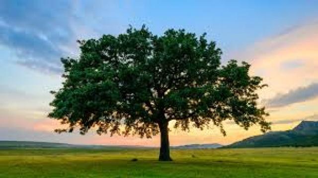 Ağaç - Doğal Kaynak Nedir?