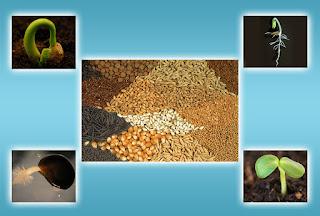 Principles Of Seed Technology ICAR E course Free PDF Book Download e krishi shiksha