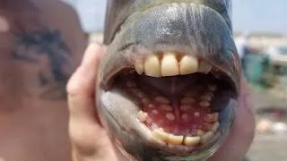 5 loài cá có hình dạng kỳ lạ nhất việt nam