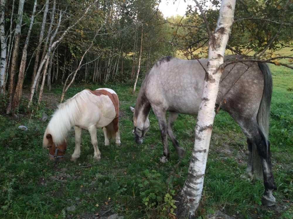 sex stälningar knulla med häst