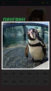 около водоема стоит разукрашенный пингвин