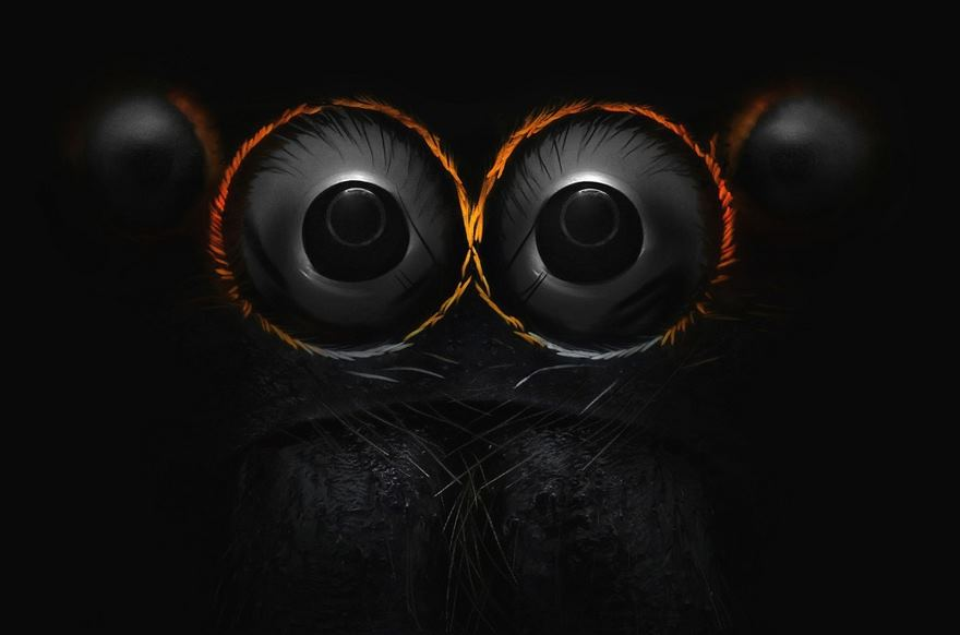 2016 Nikon Macro Photo Contest Winners Show The World Like You've Never Seen Before - Eyes Of A Jumping Spider