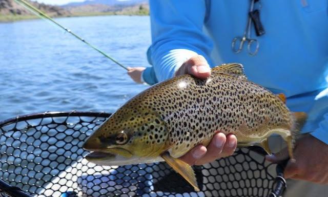 Efek Catch And Release Fishing Hanya Untuk Kesenangan