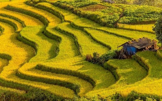 7 breathtaking ripe rice paths to 'hunt' the golden season photos