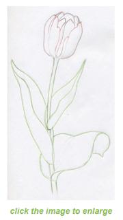 Cara Menggambar Bunga Mudah Untuk Anak
