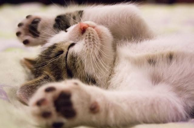 Perawatan Kesehatan untuk Kucing Peliharaan Anda