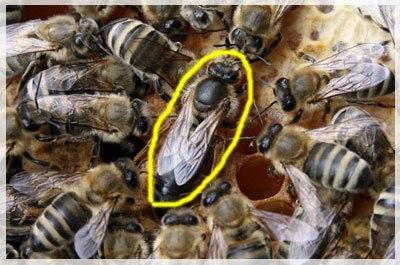 jual madu hutan sumbawa asli