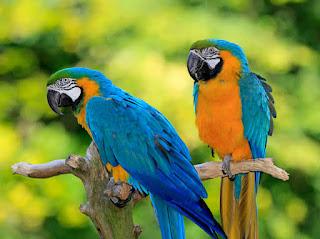 चिड़ियाघर में दर्शक जल्द देख पाएंगे एक्जॉटिक पक्षियों को