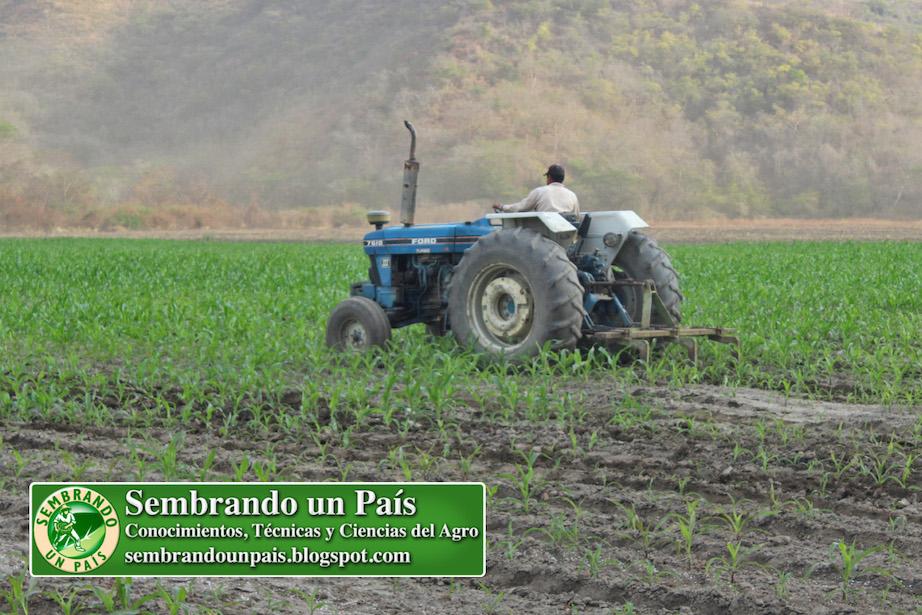 fertilización de cultivo de maíz