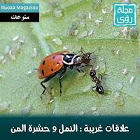 بالصور و الفيديو : سر العلاقة الغريبة بين النمل و حشرة المن