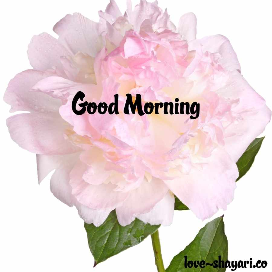 goodmorning images with flowers