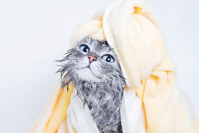 bulu kucing rontok