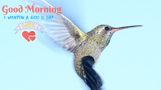 Little Bird Good Morning image