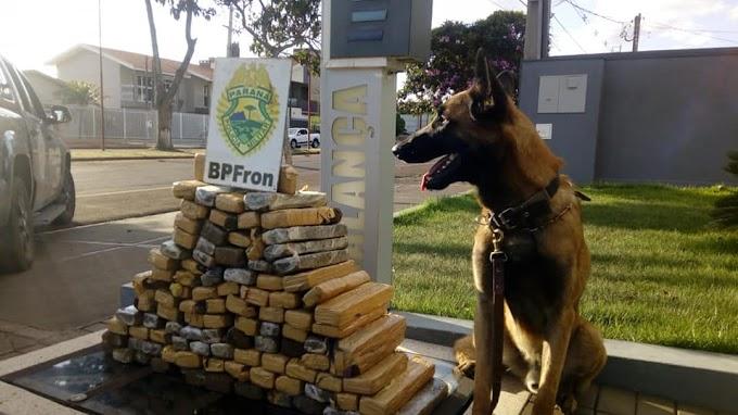 Cerca de 76Kg de drogas são apreendidas em Toledo pela BPFron